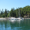 #6 - Jones Island | West of Deer Harbor. Day & overnight mooring/camping. North-end has dock space, buoys & good anchorage. South-end has a few buoys and ok anchorage but subject to boat traffic. Picnic areas, toilets, great beaches, hiking and deer!